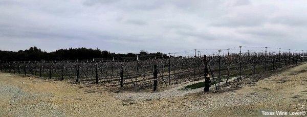 Dove Ridge Winery's vineyard