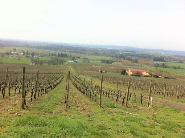Vineyard on a Slope in Oregon