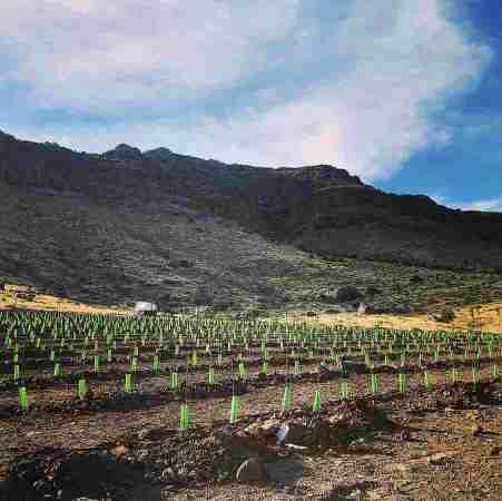 Vineyard at Blue Mountain