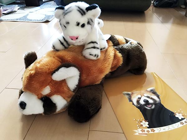 レッサーパンダ家が動物園の売店で買ったぬいぐるみとクリアファイル。人気グッズです。