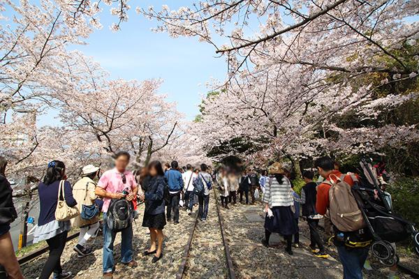 まるで、はじけるような満開の桜に感激です!でも、人の多さにはちょっとうんざりです。