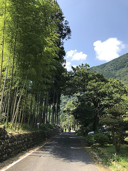駐車場からモネの池に続く道。山から吹く風が涼しくて気持ちいい。