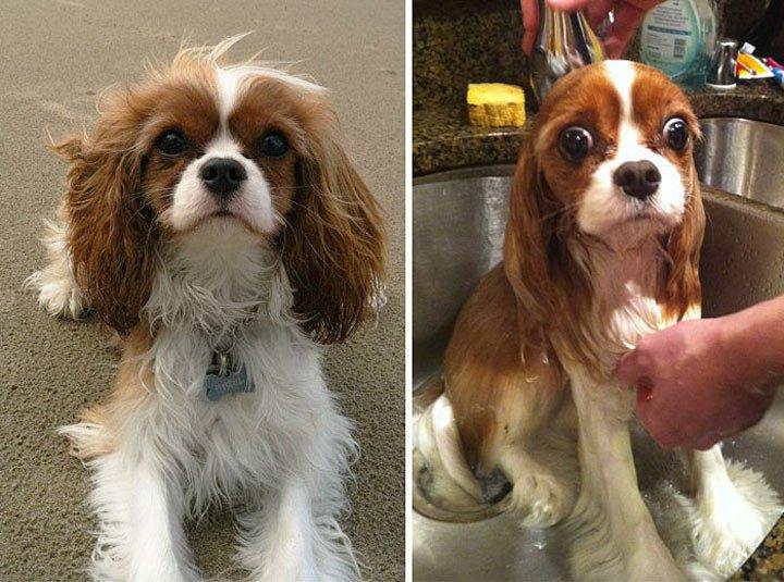 10 умилительных фото собак, которых только что искупали