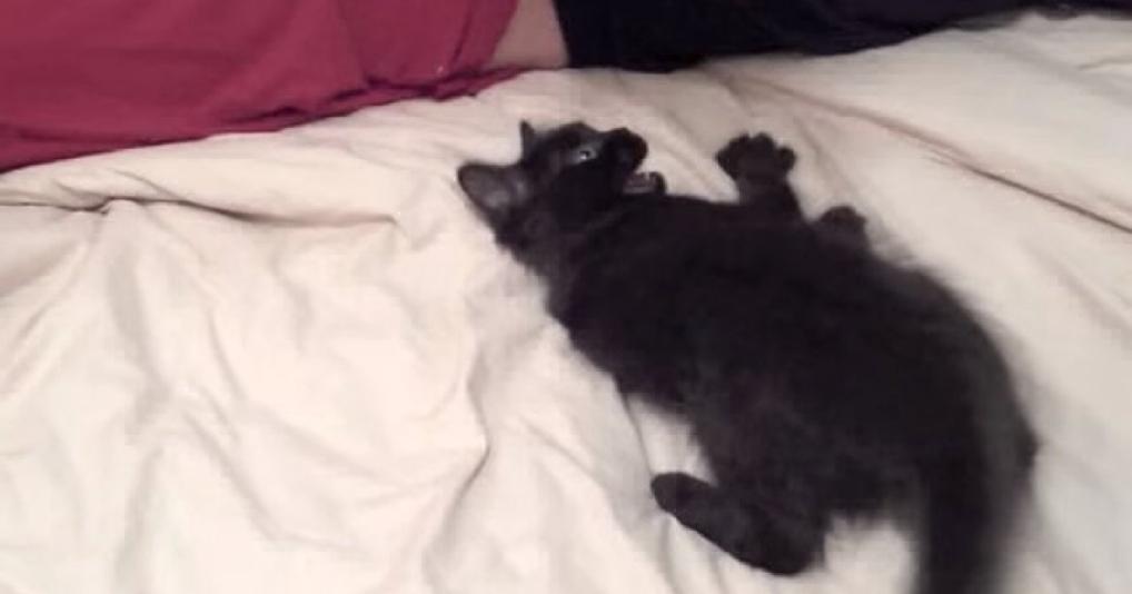 Как успокоить буйного котенка: оригинальный способ