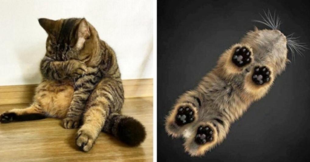 Кот не ожидал такого радикального разрыва шаблона