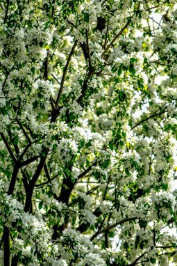 Blooming Tree 3 (Optimized)