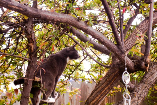 Floyd-In-A-Tree-(Optimized)
