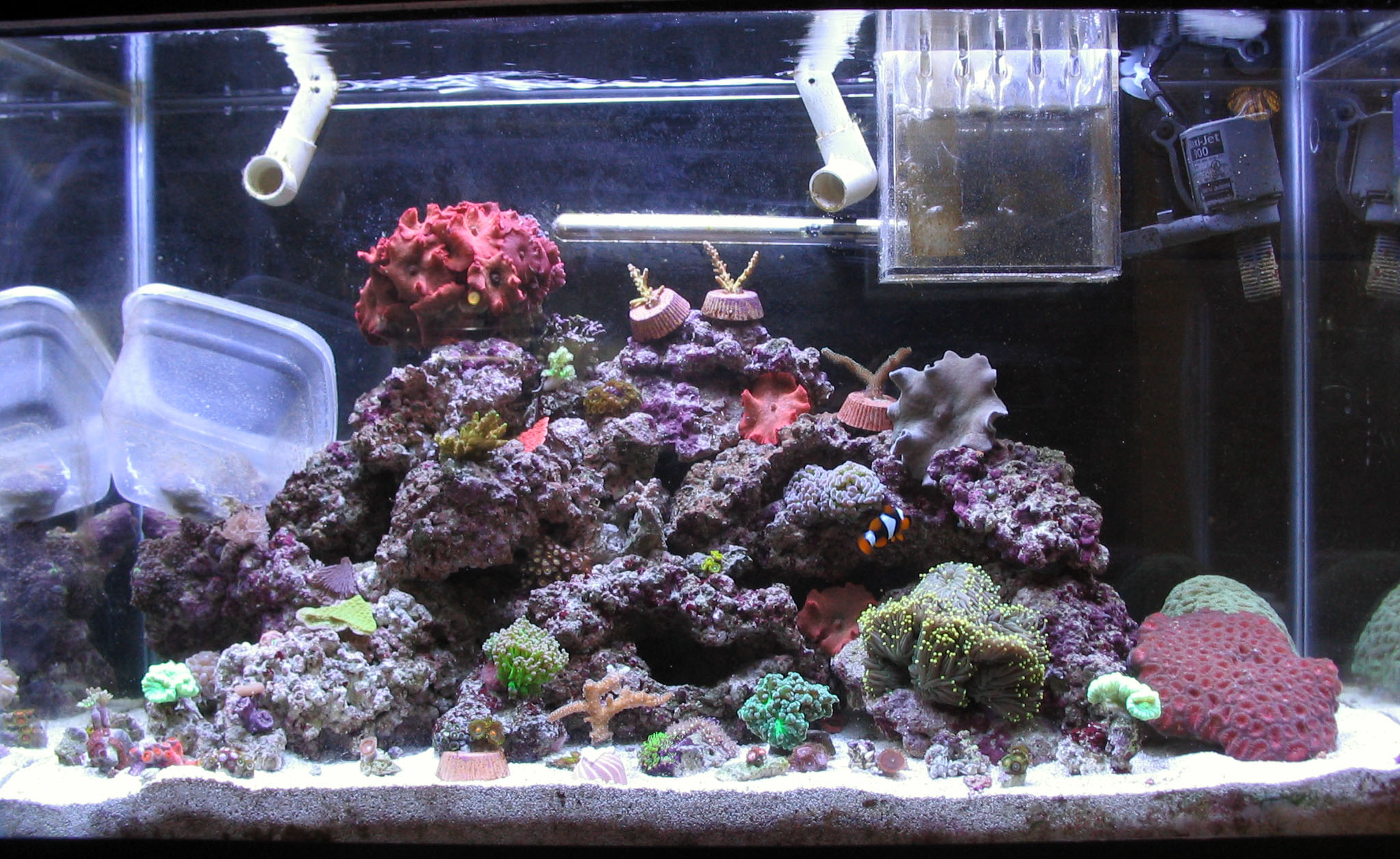 29 Gallon Saltwater Reef Tank – Tyler Merrick