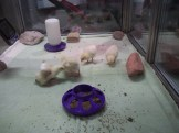 37 Newly Hatched Chicks