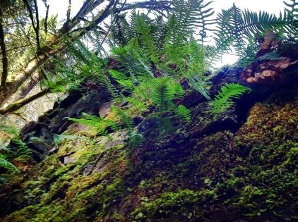 Forest Park, Portland, Oregon
