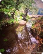 Fivemile Creek