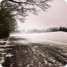 Snowy field with oaks