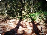 1-shadow-play_2