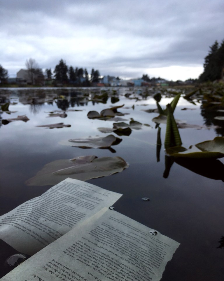 torn pages of a book float on the surface of a calm lake.