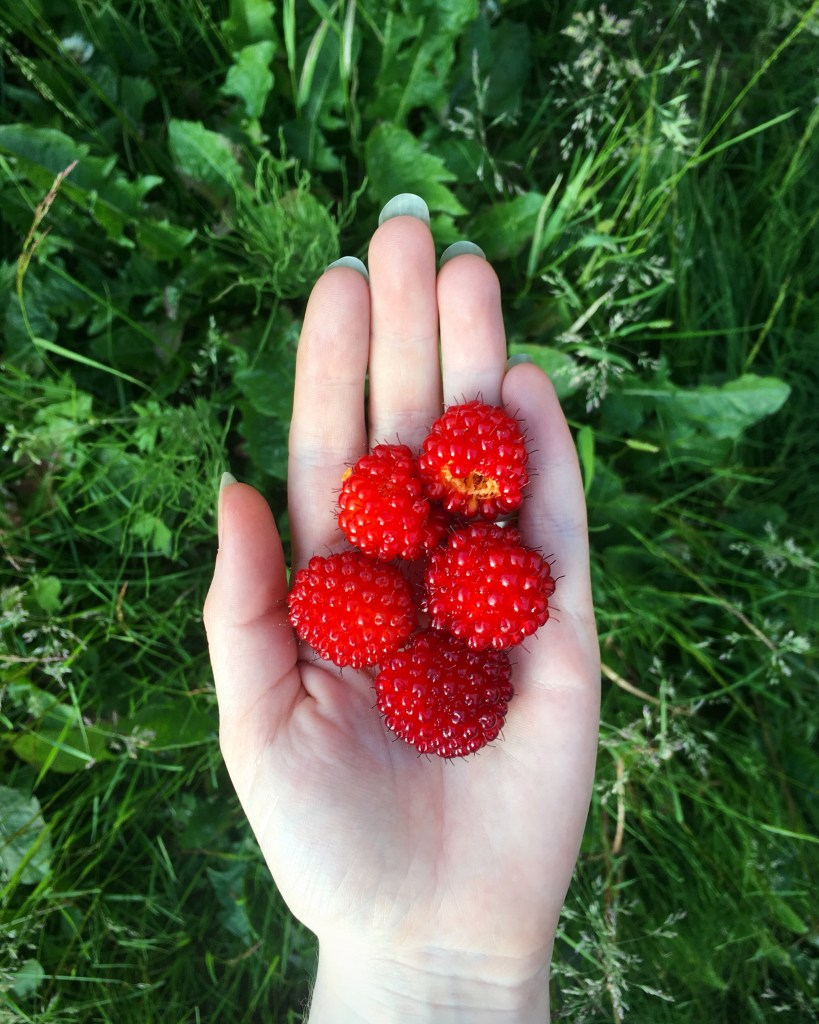 Huge salmonberries in the palm of my hand.