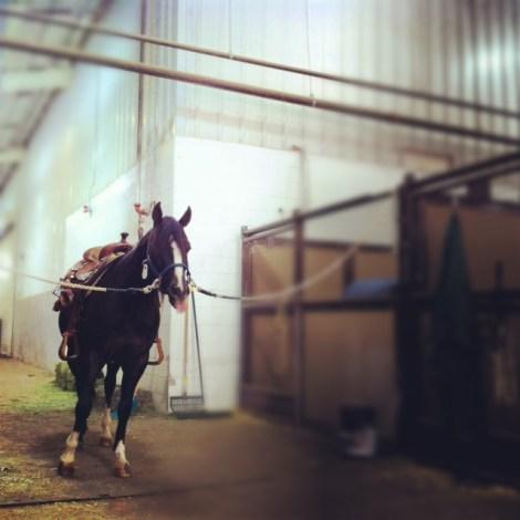 Blaze, my friends three year old stallion.