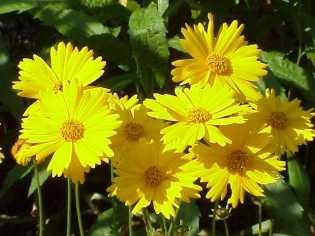 Photo Courtesy of Wikipedia www.wikipedia.org