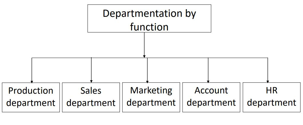 structure of departmentalization by function