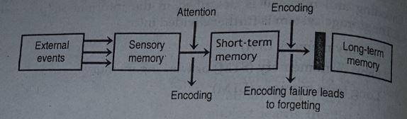 Atkinson and Shiffrin Stage model of memory