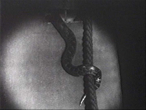 rope or snake