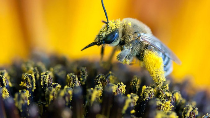 bee pollen benefits