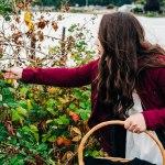 Hygge Adventures | Blackberry Picking