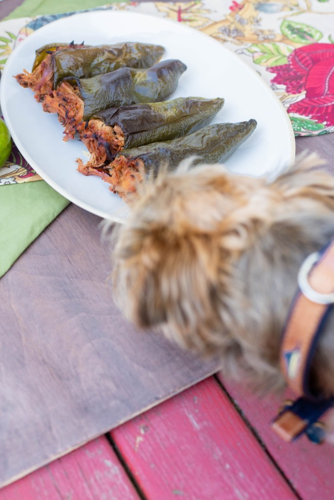 Yorkiepoo puppy trying to steal dinner it's so good!