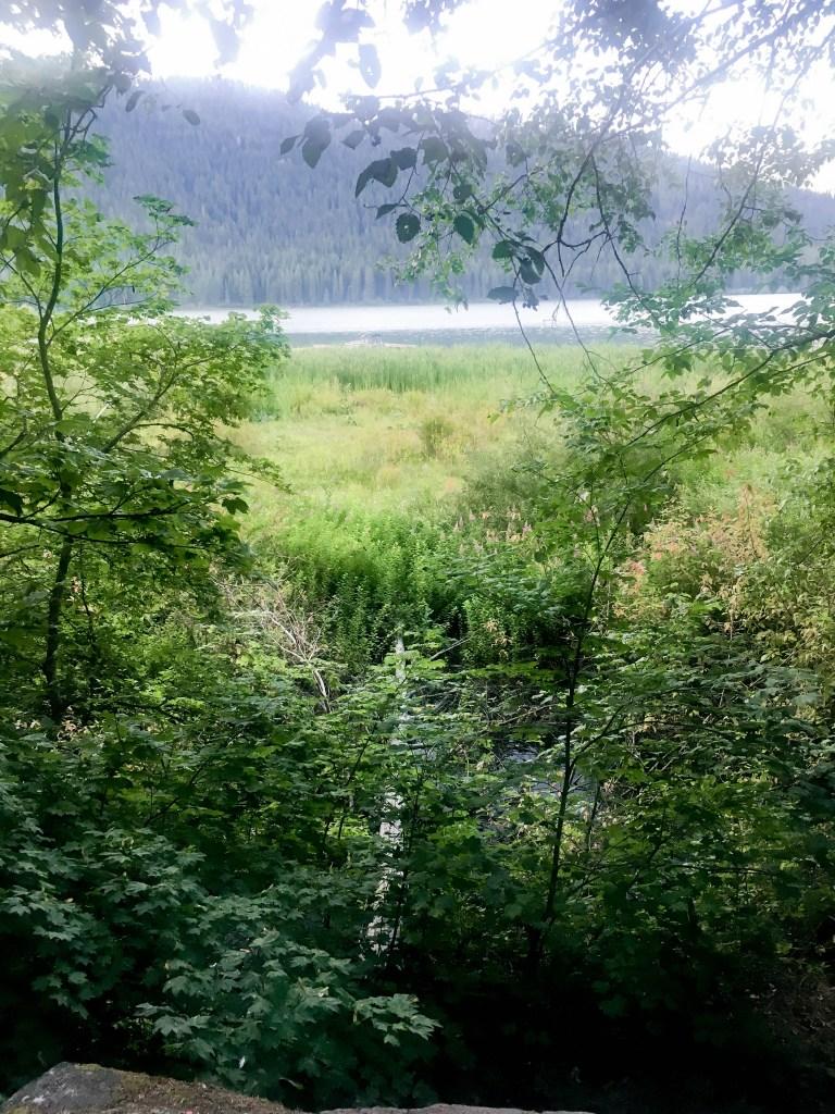 Fish Lake through the trees