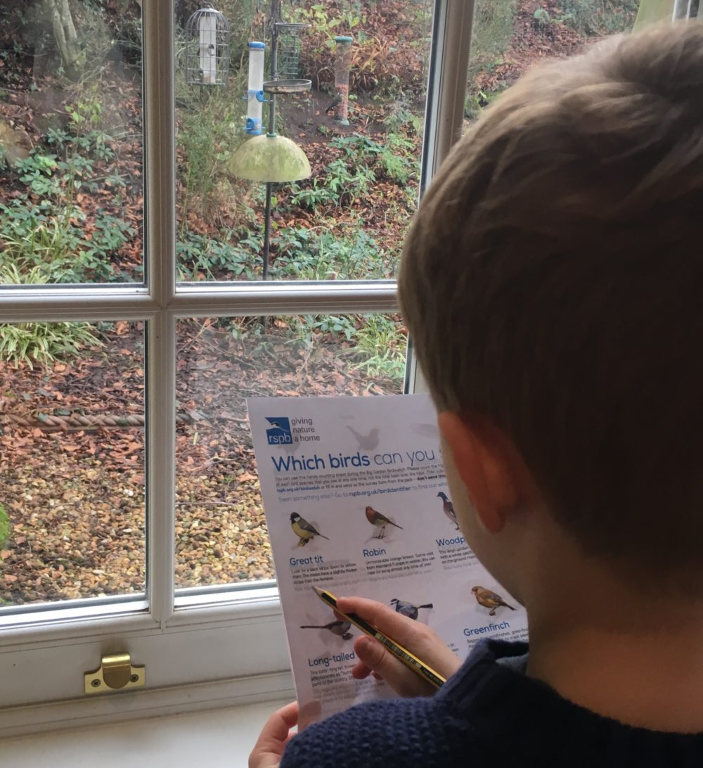 The Big Garden Birdwatch