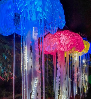 Jellyfish lanterns at Chester Zoo