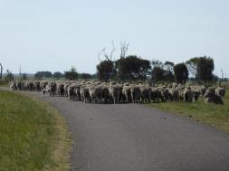 045. Road blockage on the way to Seaspray