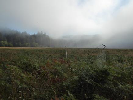 015. Elk Prairie campground