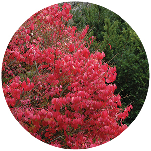 This image has an empty alt attribute; its file name is Burning_Bush.jpg