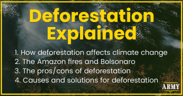 Deforestation Explained