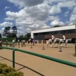 2020 新潟記念 登録馬・参考レース