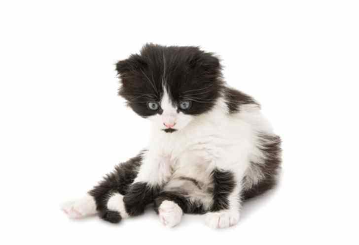 座るハチワレ子猫ちゃん