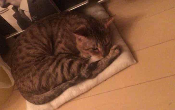 キジトラ猫 クッション