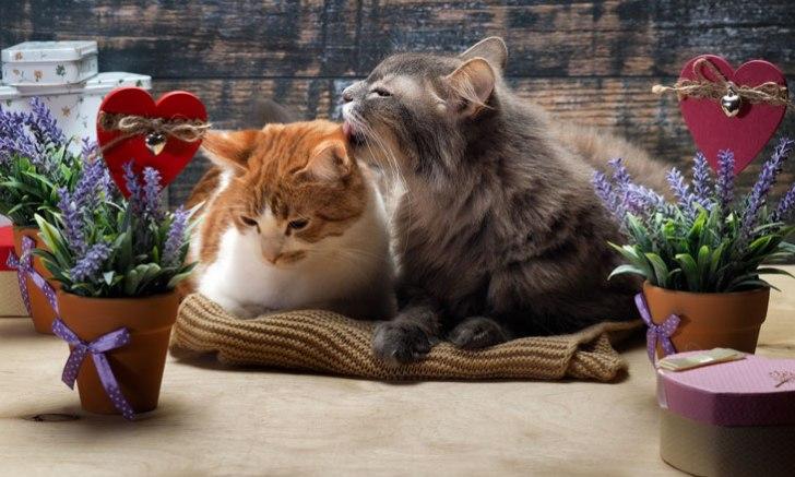 スリスリする兄弟子猫