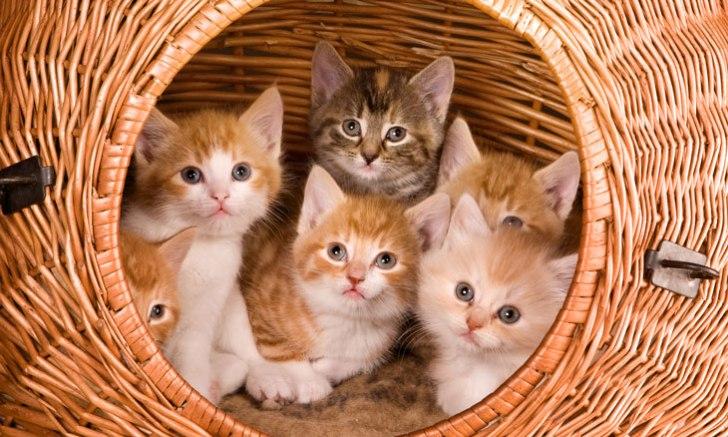 凝視する兄弟子猫
