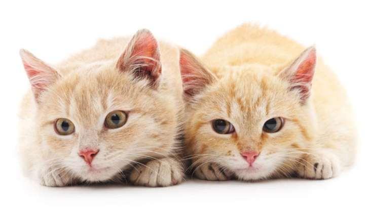 二匹の兄弟猫