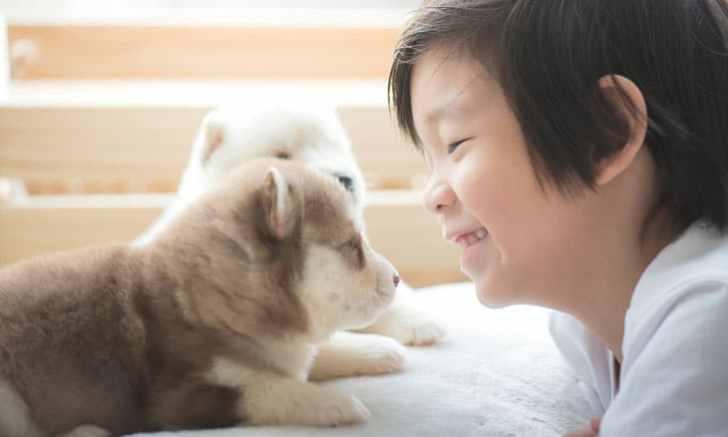 産まれたてのシベリアンハスキーの子犬