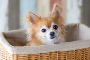 【英語】これだけは知っておくべき犬種に関する英単語一覧