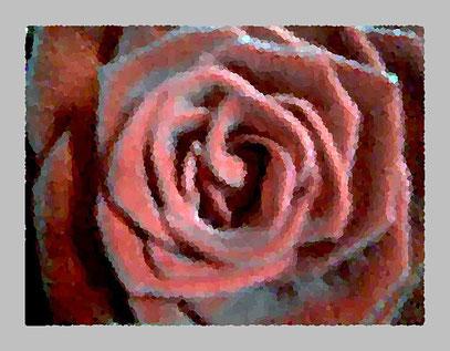 1 Rose ist 1 Rose ist 1 Rose (c) De Toys, 24.1.2008