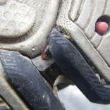 Bed Bug in Tread of Shoe