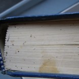 Bed Bugs in Book