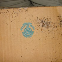 bed bugs, eggs, and feces on cardboard box