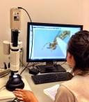Imaging microscopic wasps
