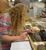 Students examining specimens