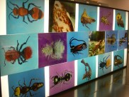 Light box with images of various insects. 2008
