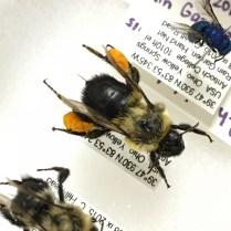 Cherokee's bees